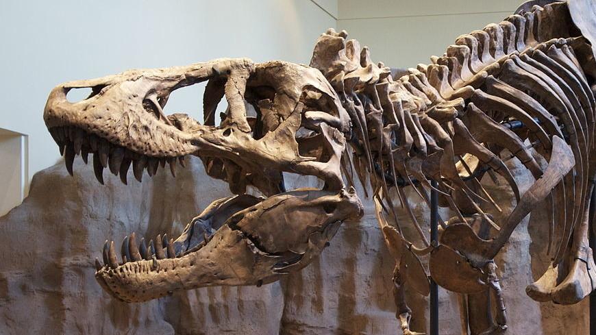 Компьютерная модель рассчитала скорость ходьбы тираннозавра