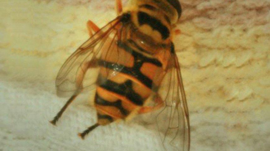 "Фото: Елена Андреева ""«Мир24»"":http://mir24.tv/, пчела"