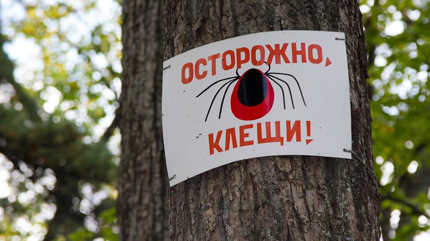 """© Фото: """"Петр Королев, «МИР 24»"""":http://mir24.tv/, осторожно клещи, клещ"""