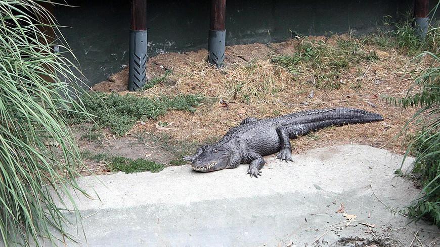 "© , ""«МИР 24»"":http://mir24.tv/, крокодил"