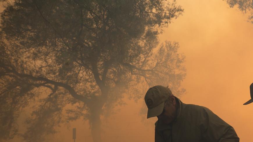 Библиотеку Рейгана в Калифорнии от пожаров спасли козы