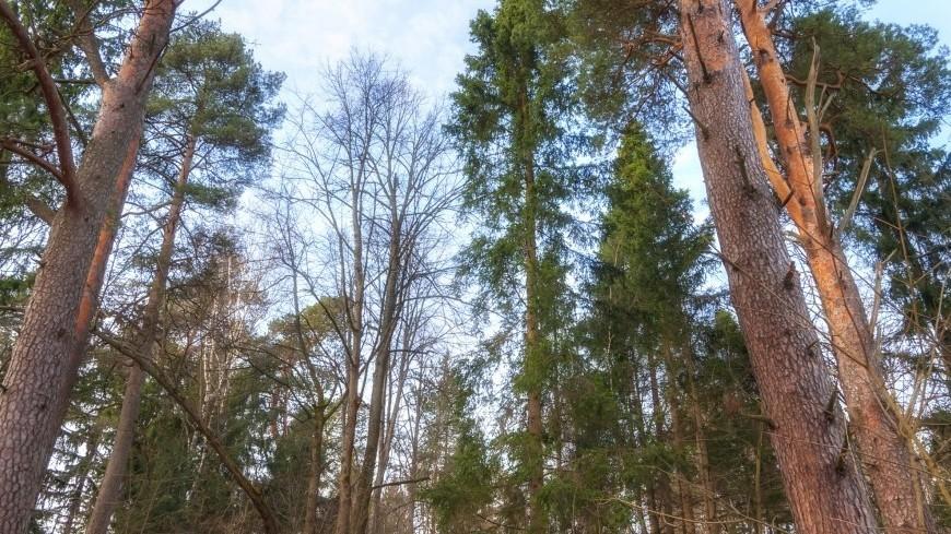 В Сахалине обустроят природный парк на «дальневосточных гектарах»