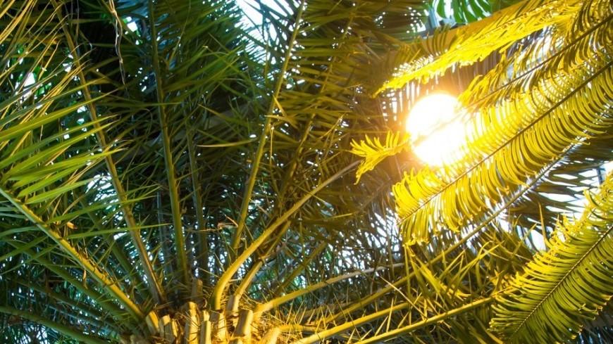 Американские ученые создали растения-лампочки