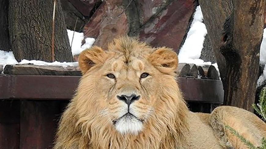 Угощение для животных: в Московском зоопарке принимают новогодние елки