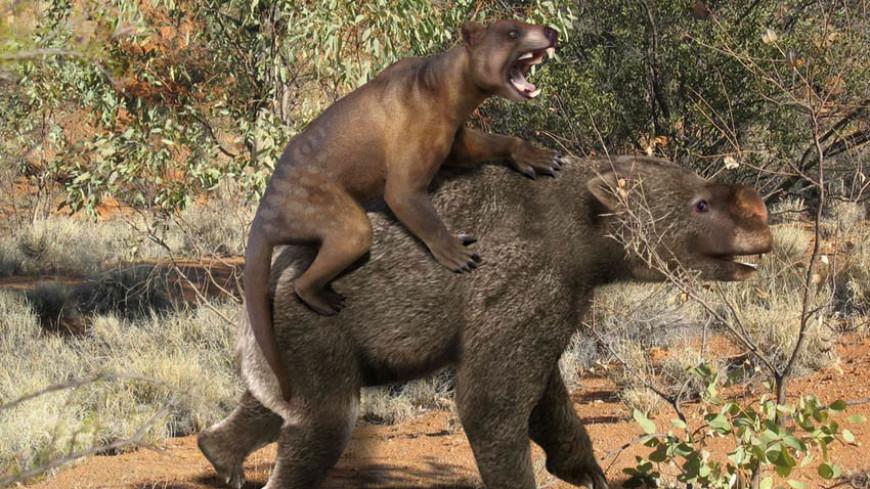 Древнего сумчатого льва размером с кошку нашли в Австралии