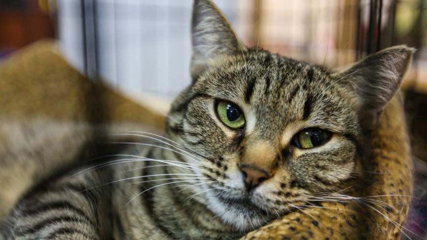 приют, приют для животных, кошачий приют, кошка, кошки, кот, коты, животные, бездомные животные, шерсть, когти, мурчание, домашнее животное, мурлыкание, клетка, заточение, содержание, неволя,