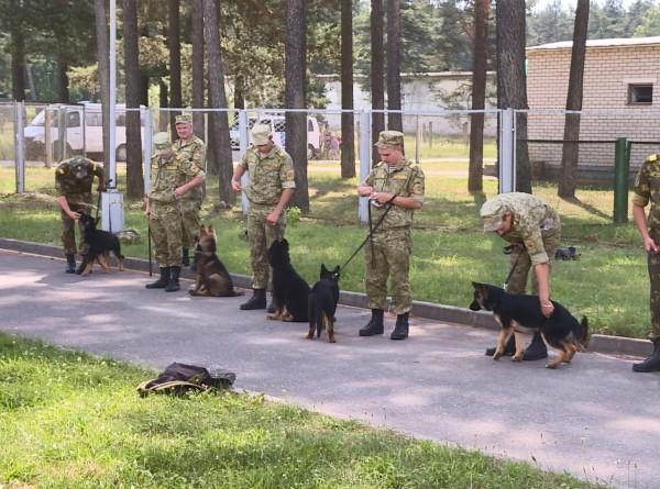 Нюх на преступление: на что способны военные собаки?