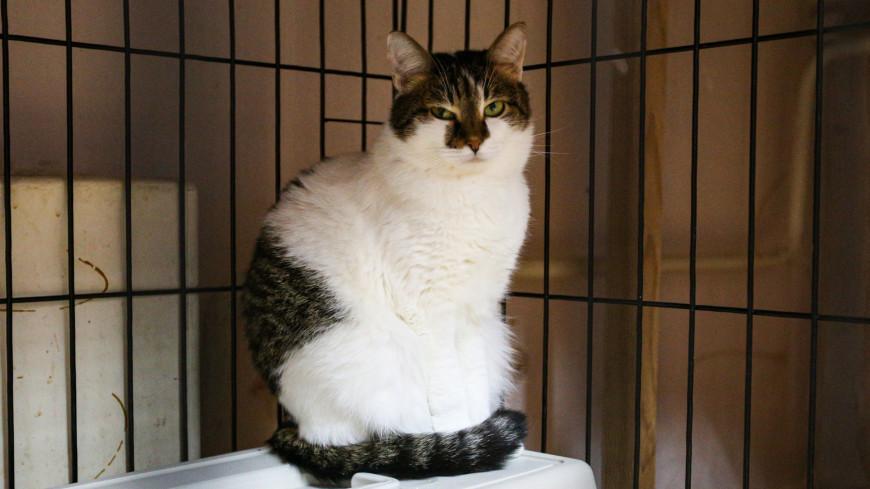 В России кошку с подтвержденным коронавирусом поместили на карантин