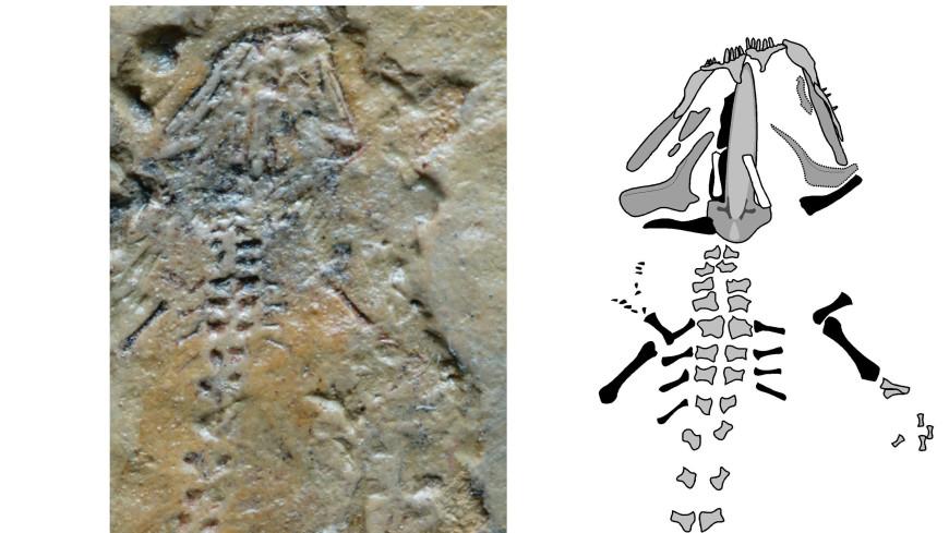 Самую древнюю саламандру на Земле обнаружили в Кыргызстане