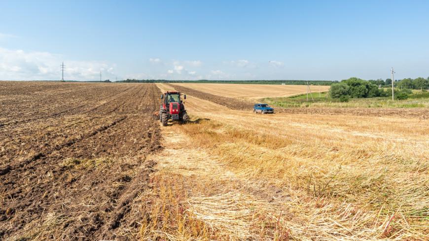 Астраханские фермеры трудоустроили 7,5 тыс. человек во время пандемии