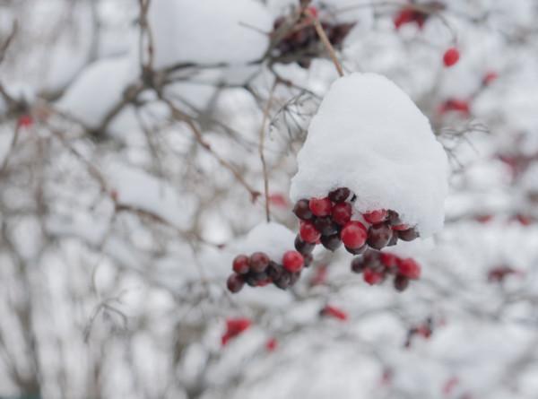 Снег может сохраниться: Вильфанд рассказал о погоде в центральной части России