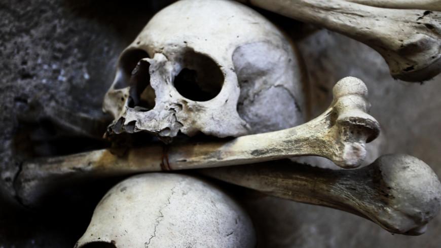 череп, кость, скелет, смерть, человеческий скелет, строение человека, человек, анатомия , патологоанатом, наука, кладбище, раскопки, кость, кости, останки, страх, ужас, жертва, склеп, могила,