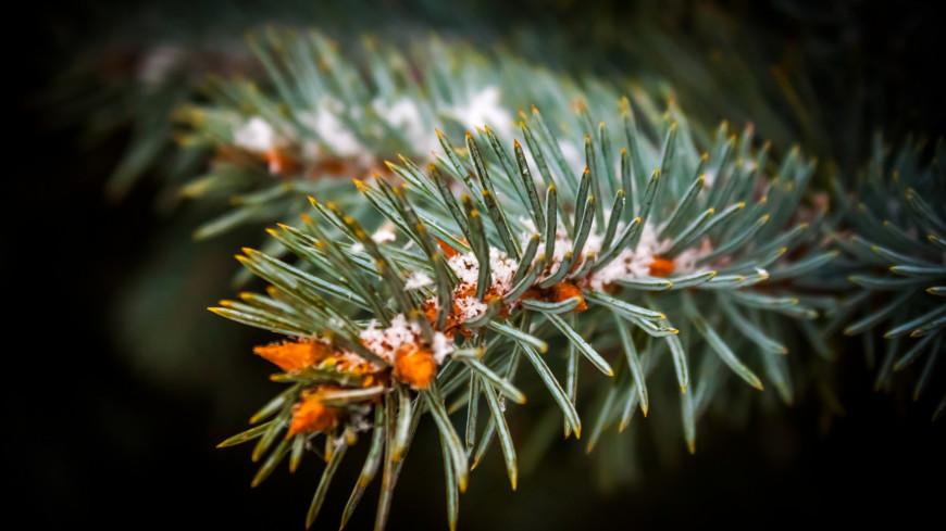 Зима (снег, сугроб, холод, мороз, ель, елка, сосна, ветка, ветвь, новый год)