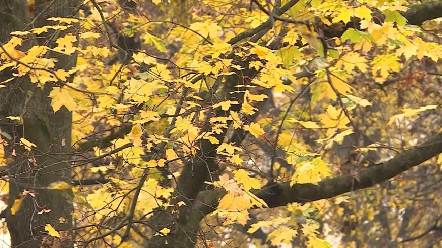 Все – в дело: в Беларуси из листвы делают органические удобрения