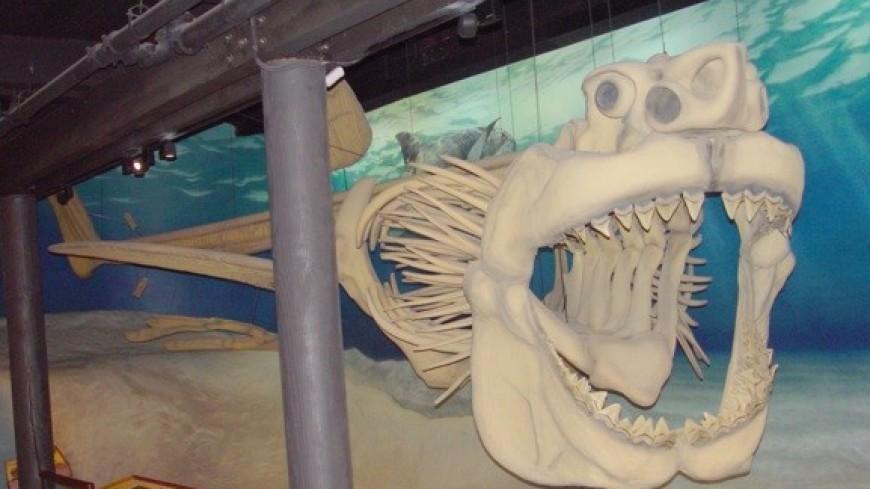 Палеонтологи нашли причину вымирания мегалодонов