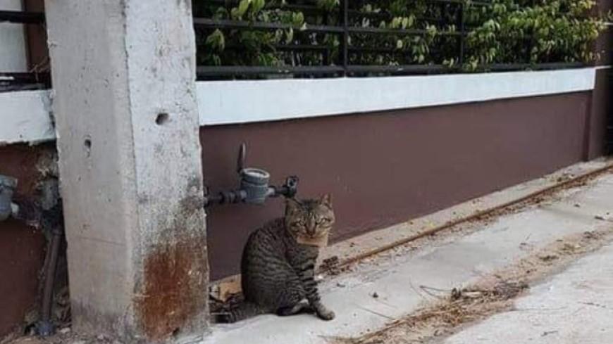 Домашний кот пропал на три дня и вернулся с «долгом»