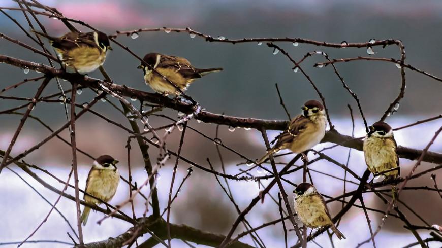 Эксперты рассказали, какие птицы остаются зимовать в Москве