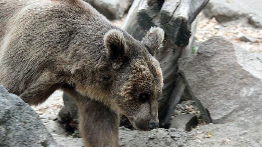 """© Александр Попов, """"«МИР 24»"""":http://mir24.tv/, фото, животные, медведь"""