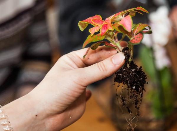 Чтобы кротон не лысел, а орхидеи цвели: как подготовить комнатные растения к зиме?