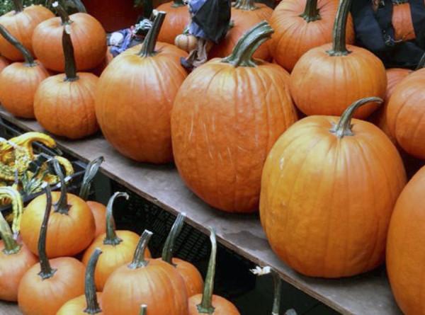 Оранжевое настроение: тыква с креветками, чили, цыпленком и кейлом. РЕЦЕПТЫ