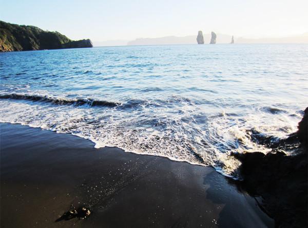 Водоросли-убийцы на Камчатке: страшная тайна Тихого океана