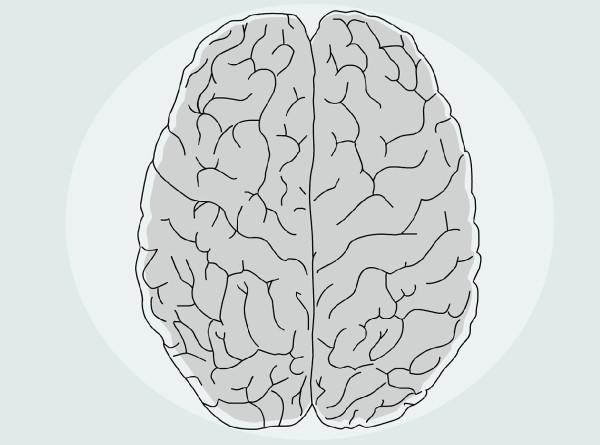 Назван возраст, когда мозг человека достигает пика своих возможностей