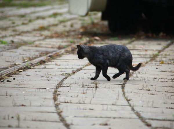 Кошки в подвалах: как можно спасти бездомных животных?