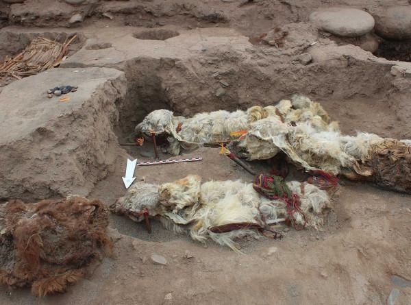 В поселении инков в Перу нашли пять мумифицированных лам