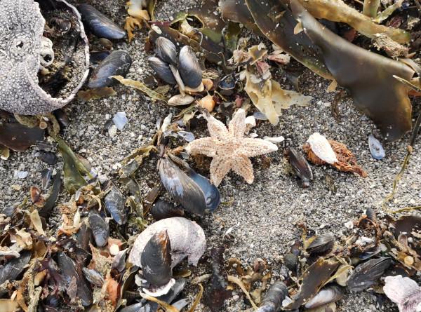 Отравленный океан: что стало причиной экологической катастрофы на Камчатке