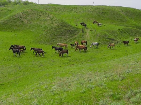 Барымта по-казахски: месть, разбой или возмещение долга?