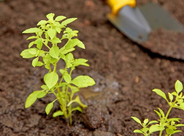 До весны: российские садоводы закрывают сезон