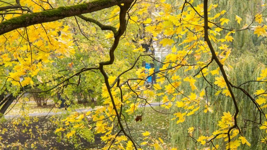 латвия, рига, осень, парк