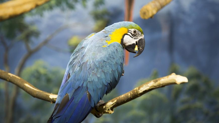 Спортдайджест: продавец попугаев приучил птиц заниматься спортом