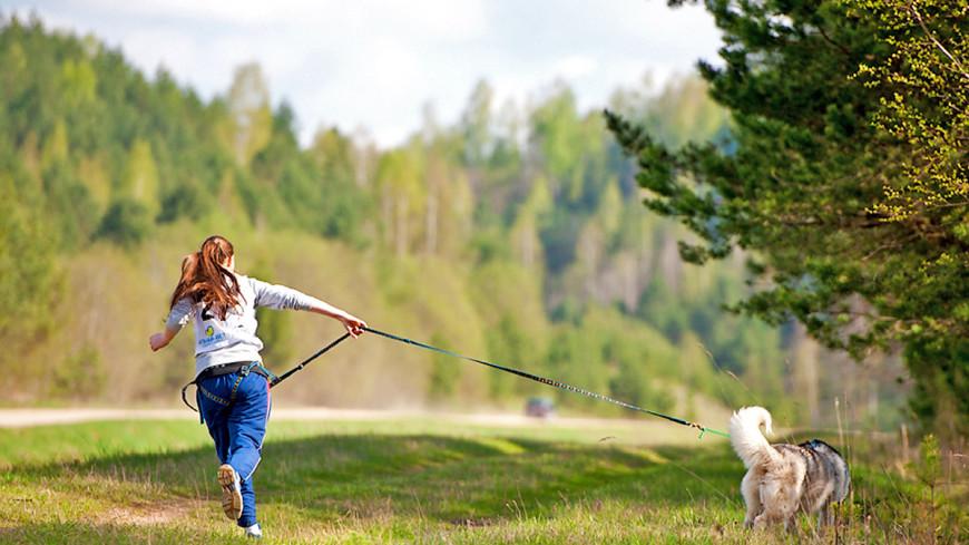 """Фото: Анна Тимошенко (МТРК «Мир») """"«Мир 24»"""":http://mir24.tv/, бег, хаски, собачья упряжка, собаки, прогулка с собакой, спорт"""