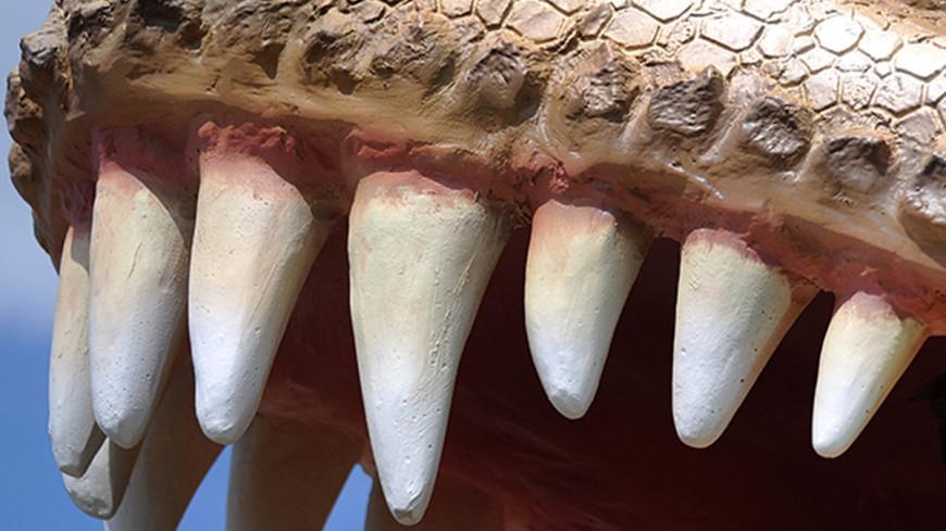 В Марокко обнаружили птерозавра-«киви» с острым клювом
