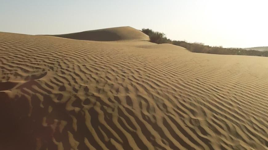 В египетской пустыне нашли кости древней морской коровы