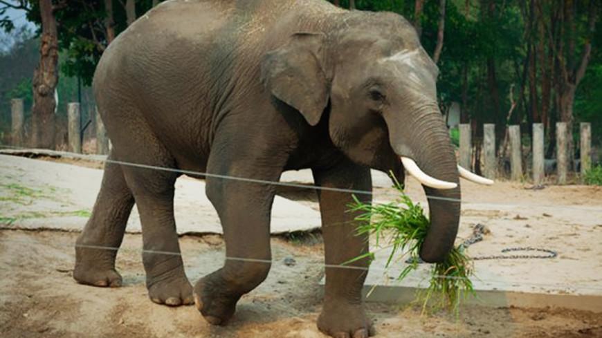 Ученые предупредили о возможном полном исчезновении слонов в Кот-д'Ивуаре