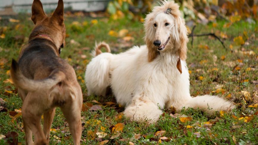 Любить – недостаточно: кинолог рассказал о фатальных ошибках собаководов