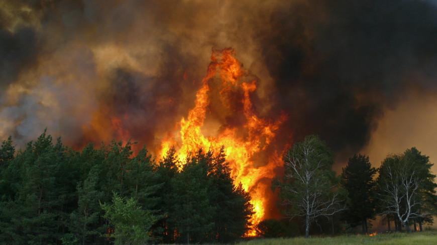 Три новых очага природных пожаров зафиксированы под Воронежем
