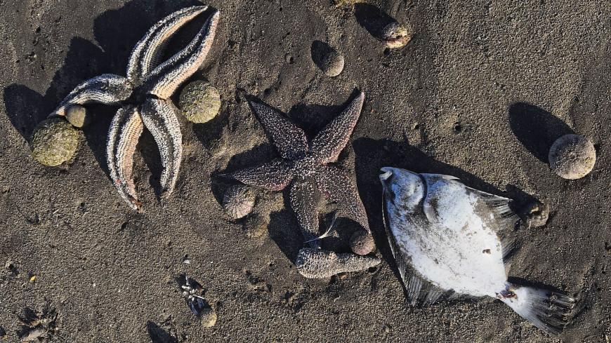 На Камчатке обнаружены новые места гибели морских животных