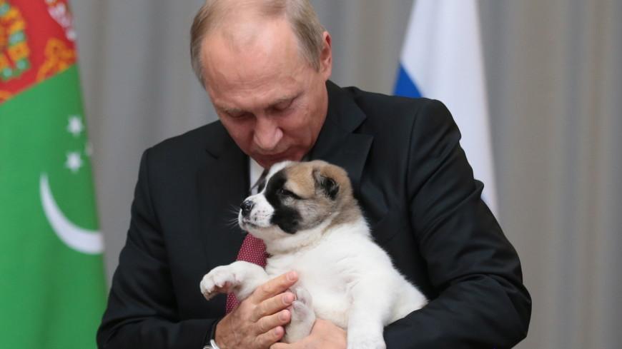 Собаки и котенок: каких питомцев дарили Владимиру Путину