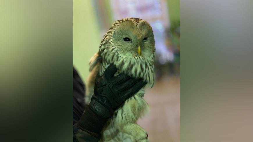 В Москве спасли сову, залетевшую на балкон