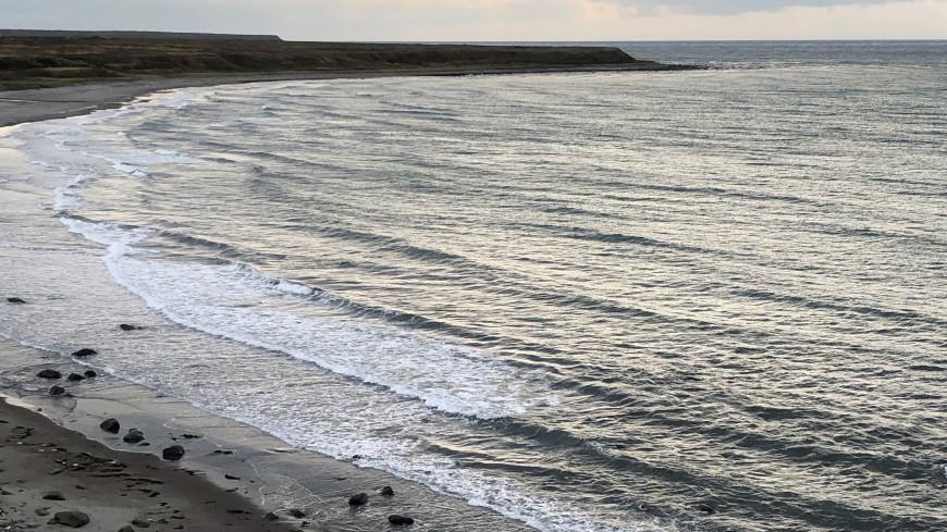 Ученые: Гибель морских обитателей на Камчетке могло вызвать кислородное голодание