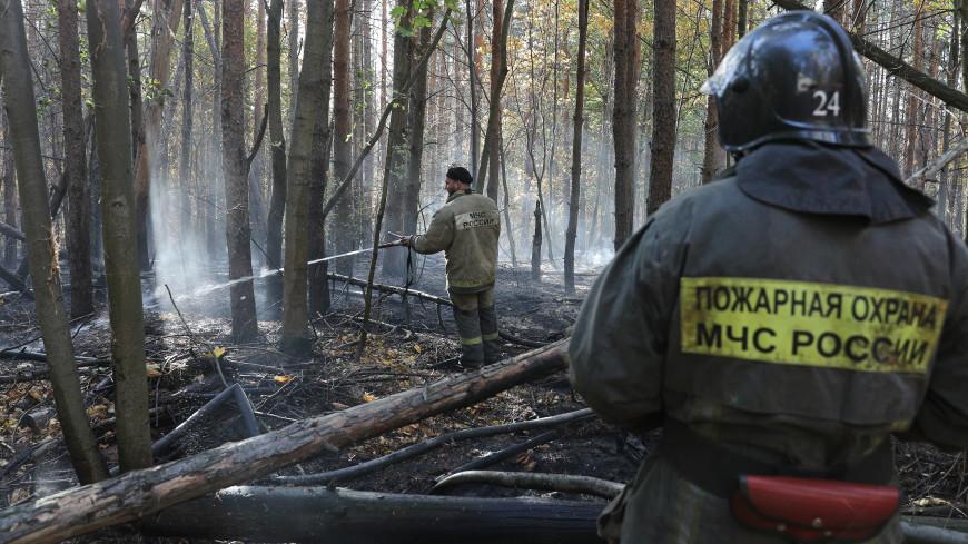 Площадь пожаров в зоне взрывов под Рязанью составила 650 гектаров