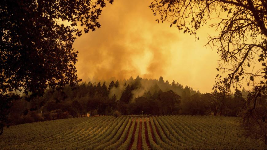 Пожарные сообщили о локализации лесного пожара на севере Калифорнии
