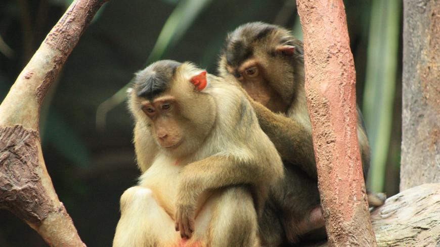"""Фото: Мария Чегляева, """"«МИР 24»"""":http://mir24.tv/, зоопарк, макака, обезьяна, животные"""
