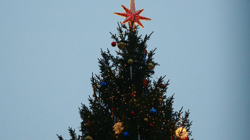 Петербуржцы выберут новогоднюю елку