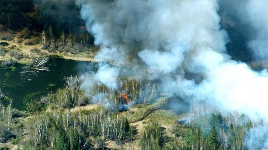На горящие под Воронежем леса сбросили за сутки 500 тонн воды