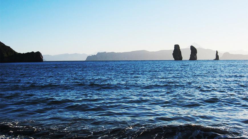 В РАН назвали причину гибели морских животных на Камчатке