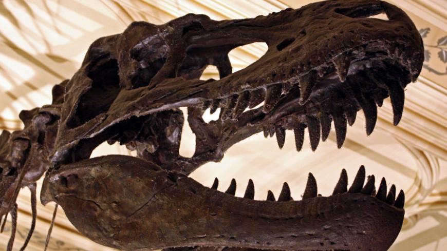 Шотландские палеонтологи нашли кость крошечного тираннозавра